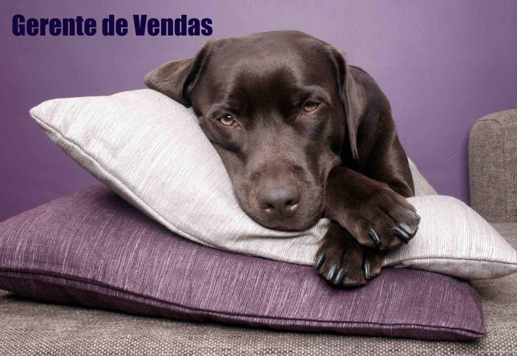 Na história de palestrante, o palestrante Cláudio Luvizzotti narra o causo do cão que se chamava Vendedor